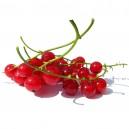 Gelée de Groseille rouges